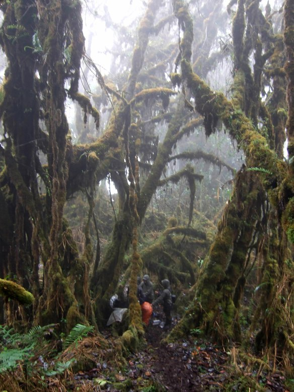 WLT film crew working in the cold wet cloud forest of our Cerro Candelaria Reserve, Feb 2013. Photo: Lou Jost.