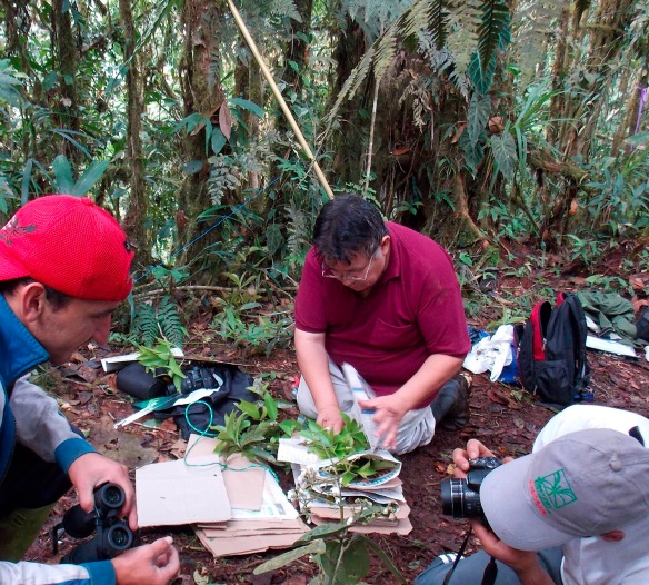 Dr Antonio Vazquez in the magnolia forest of our Rio Zunac Reserve. Photo: Luis Recalde/EcoMinga.