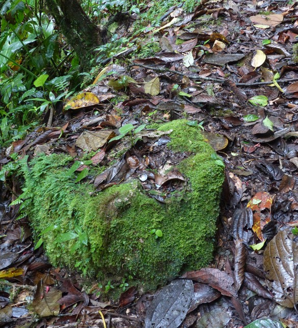 Anvil rock used by the Giant Antpitta to crack snail shells. Photo: Lou Jost/EcoMinga.