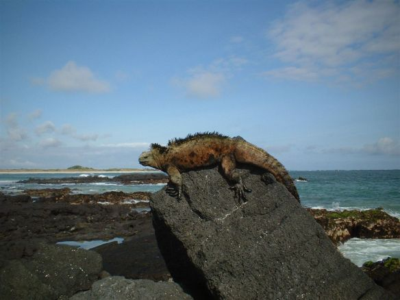 Galapagos scene. Photo: Wikipedia Commons