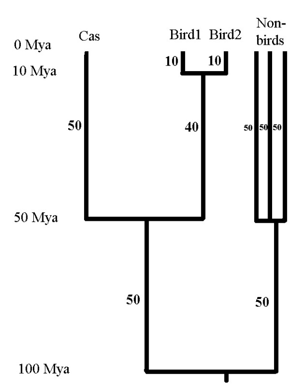 Figure 2. A time-calibrated phylogenetic tree for an imaginary bird community. There is a Cassowary (Cas), and two other birds that are closely related to each other but not to the Cassowary. The non-birds of the community are also shown in the tree. The number beside each branch is its length in millions of years.