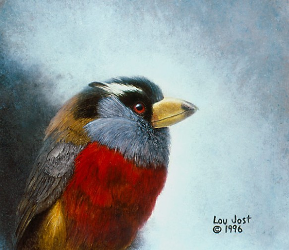 Toucan barbet (Semnornis ramphastinus). Painting by Lou Jost.
