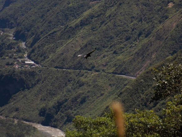 Black and chestnut Eagle (Spizaetus isidori) crossing the corridor. Below is the Rio Pastaza and the Banos-Puyo highway, which disappears into a tunnel just to the right. Photo: Luis Recalde/EcoMinga.