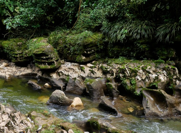 The Rio Anzu. Lou Jost/EcoMinga.