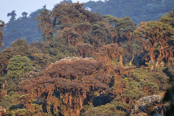 Manduriacu forest catching the sun. Photo: Sebastian Kohn.