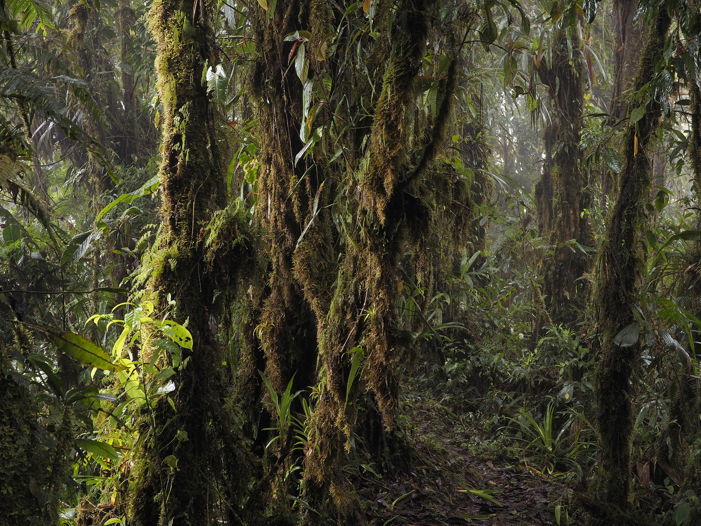 OLYMPUS DIGITAL CAMERA & Cloud forest images from our Rio Zunac Reserve and canopy access ...