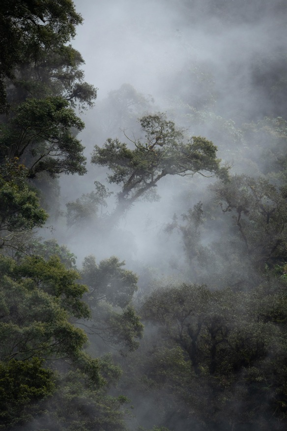 Chocó-cloud-forest_2399